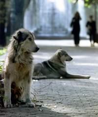 Собранная информация о бездомных животных и мнения граждан